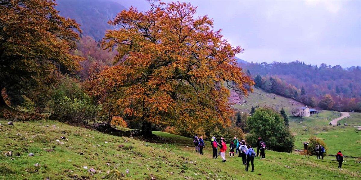 event-Il Sentiero dei Grandi Alberi - SECONDA PARTE