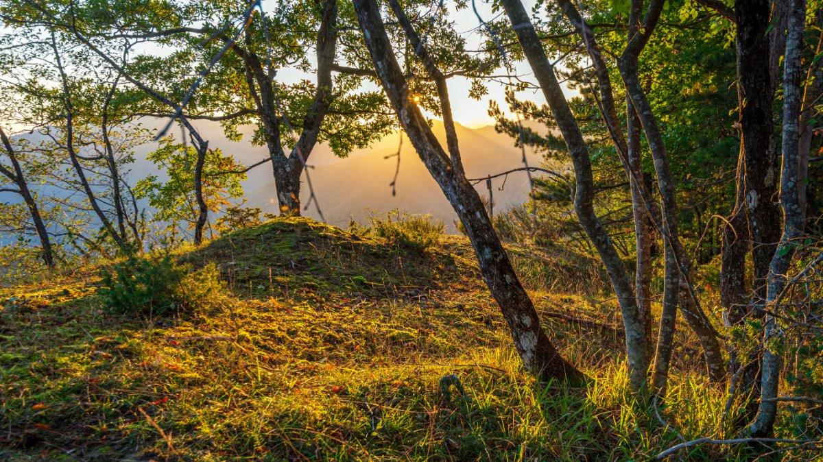 event-La Foresta di Campigna nel Parco Nazionale del Casentino