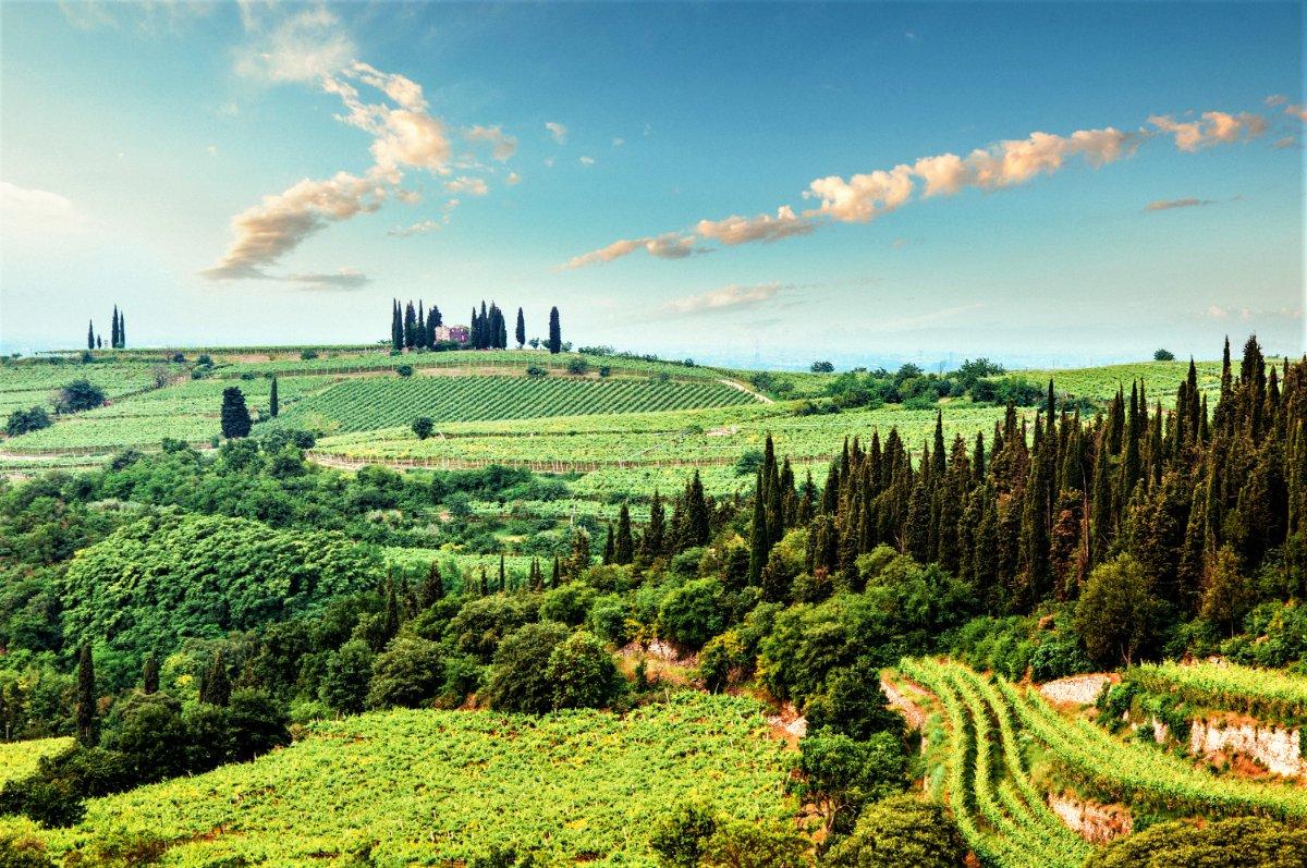 event-Passeggiata con Picnic tra le Eleganti Vigne di Custoza