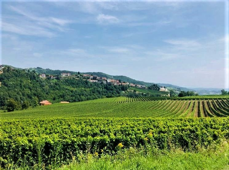 event-Loazzolo e i Sentieri del Vino: Terre dal Fascino Senza Tempo - POMERIGGIO