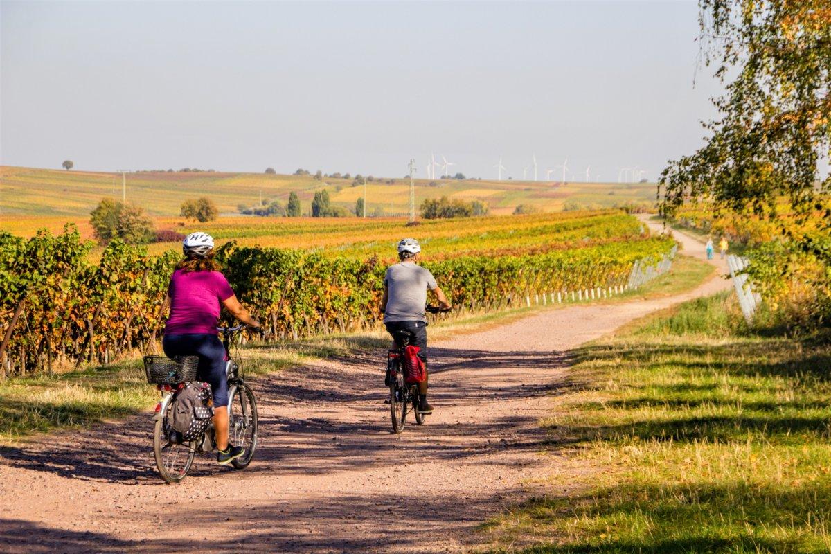 event-Biciclettata nelle Terre del Prosecco: Tra Vigneti e Antiche Borgate