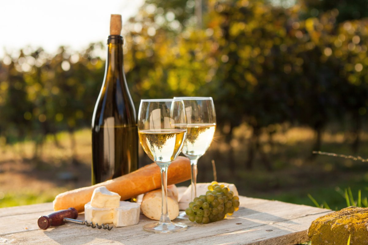 event-Visita alla Vigna e Degustazione di Pregiati Vini Bolognesi