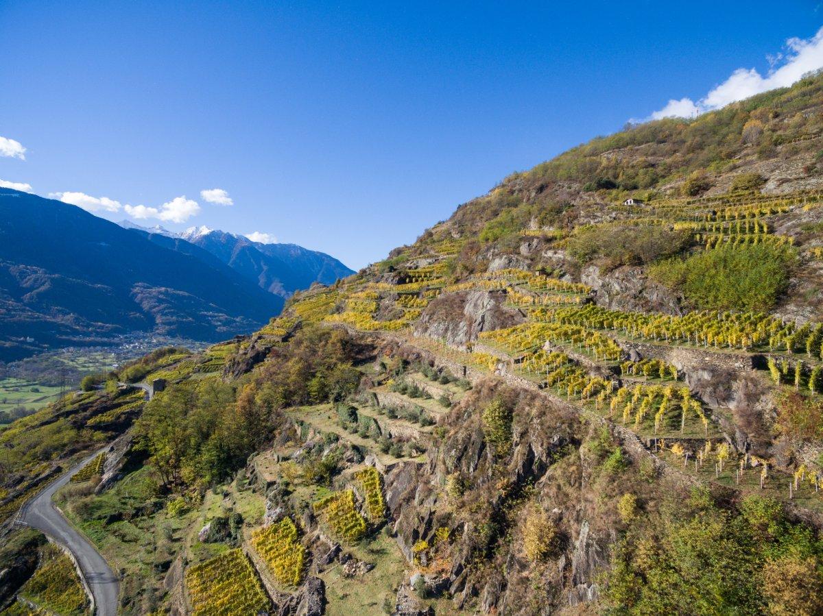 event-Tra i Vigneti della Sassella, Alla Scoperta della Viticoltura Eroica Valtellinese