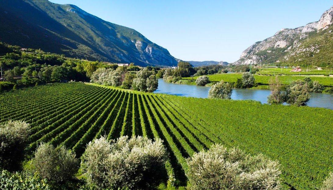 Trekking tra le Vigne con degustazione