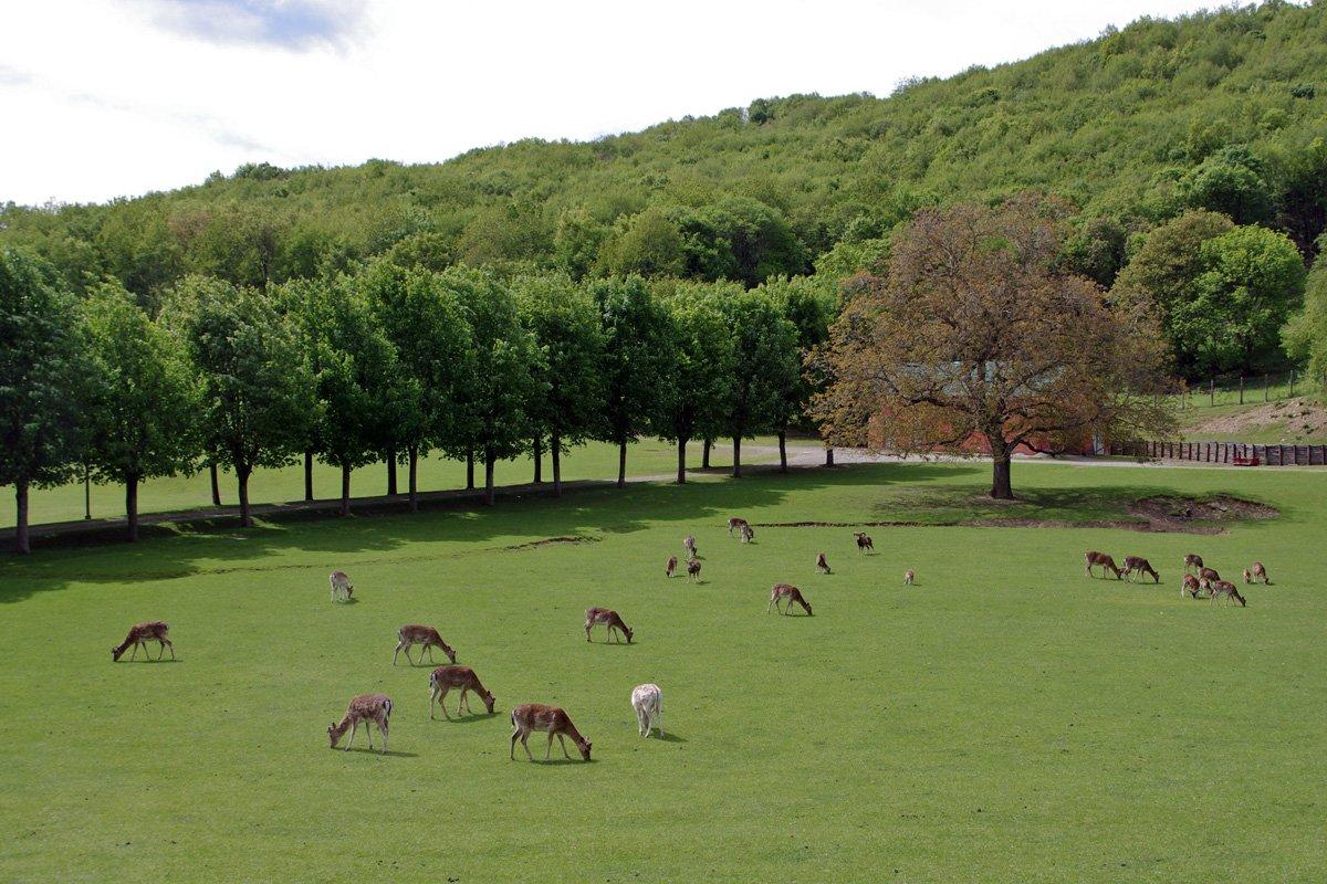 event-Parco del Monte Fuso: Un Percorso tra Cervi e Daini